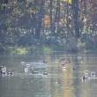 秋の富良野・鳥沼公園