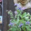 ボリジと紫陽花とプータちゃん♪