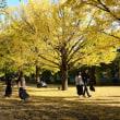 昭和記念公園 イチョウ並木・・5