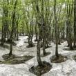 鳥海山のある風景(桑の木台湿原)