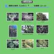 武庫川の樹木4
