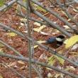 近くの公園の鳥達