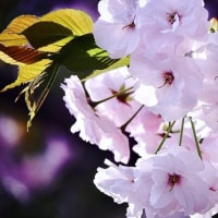 весна(ロシア語で春)