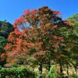 紅葉の季節到来