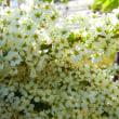 爽やかな日。春の花。