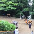 馬もリハーサル?