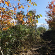 紅葉始まる氷ノ山 2017年10月11日  その1