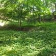 新緑の片倉城跡公園 2018.4.22