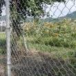 向日葵・撫子・桔梗・ヤブカンゾウ・鬼百合・ 2017.07.07 「309」