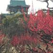 大阪城の梅林に行ってきました