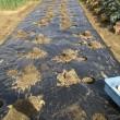 ジャガイモを植えた