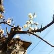 梅花が咲いた~