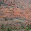 紅葉登山 in 安達太良山系