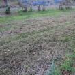 サツマイモ,藍,枝豆,綿の畑を、麦畑用に転換する作業