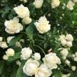 春 花 緑5