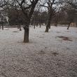 ★今朝雪が舞いました 2017