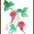 ヤブの中 葛の花が可愛いい