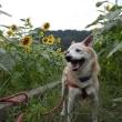愛犬まるの月命日1+7