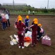 おいもほり7:畑