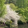 2018.04.10 新宿御苑: 定番、水辺の桜の風景