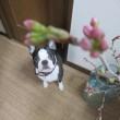 私のお花見