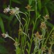 平尾台自然の郷野草勉強会30年度第6回