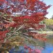 東山植物園の紅葉 P1