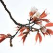 桜が上手に撮れました❤
