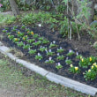 庭の冬支度