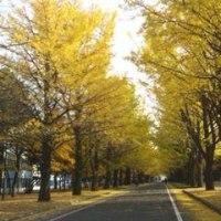 ☆北海道大学…。☆