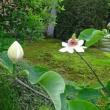 ☆季節は移ろう、庭の花