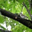 大阪城公園探鳥会 9月