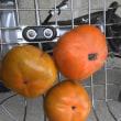 今年のウチの柿はサッパリです