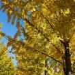 秋から冬へ(よしだ麺)