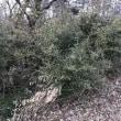 今年も竹の伐採