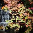 『不動紅葉』 水音と(2)