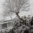 雪景色~今年も泥縄(笑)~