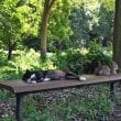 猫たちの休息