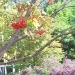 2549号ЦветокХаги(萩)