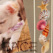 Cardごのみ473~子犬の寝顔&愛する犬たち