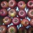 故郷のリンゴ