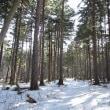 今日は春! Sakhalin Spruce Forest