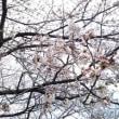 春が来ますね~(^-^)♪