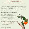 11月24日(金)オヨヨ書林せせらぎ通り店「思考の森」