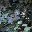 瀬上市民の森 秋の花(6)