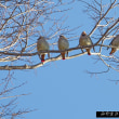 今日の鳥コレクション・・・彼方此方で観れましたが