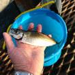釣りたくて@本牧海釣り2017.9