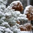湘南は大雪なう