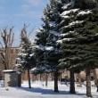 雪の公園散歩