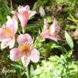 ベランダ前で咲く花達